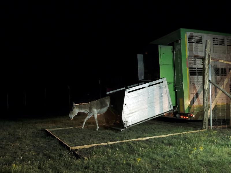 Дикие ослы снова будут свободно пастись в Тарутинской степи, как и несколько сотен лет назад