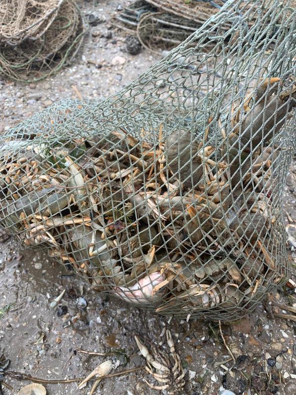 На Днестровском лимане задержали браконьеров, которые незаконно ловили раков под видом пограничников