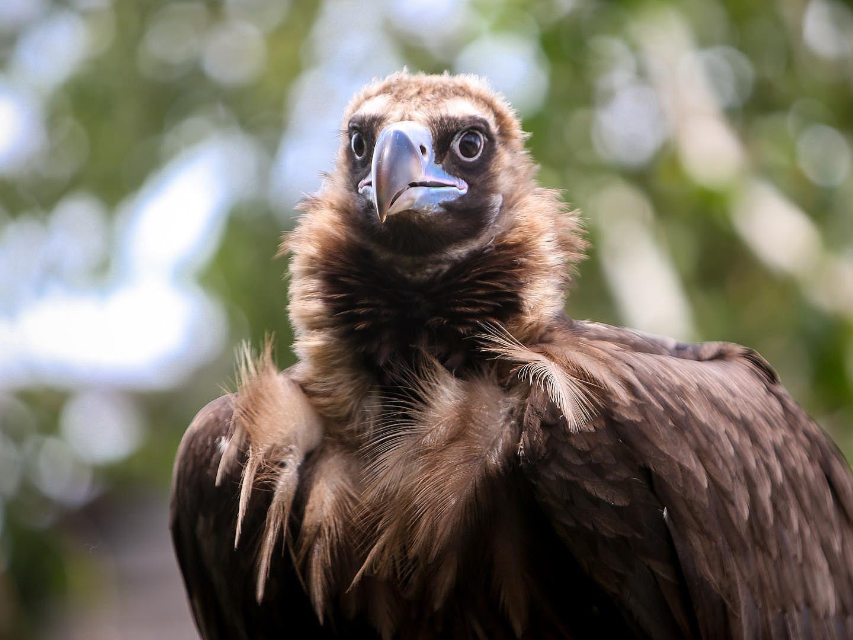 Килийский район облюбовали нетипичные птицы: стервятники, грифы и овсянки