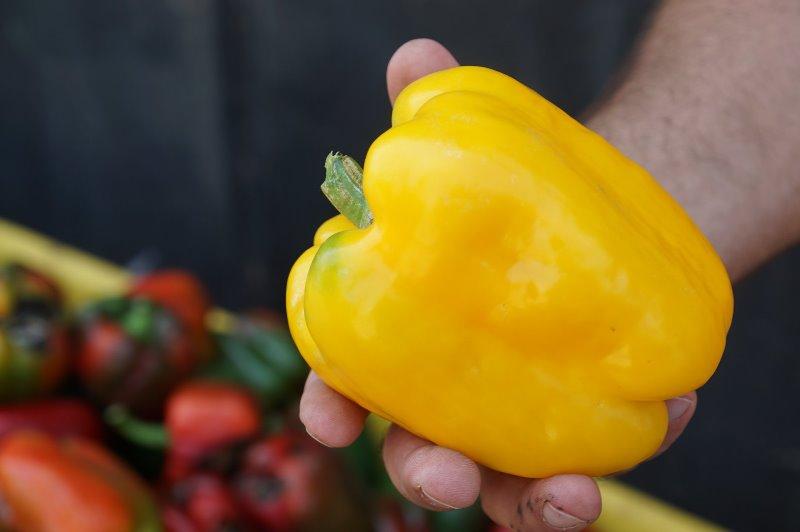 Уникальное фермерство Бессарабии: в Ренийском районе местная семья выращивает овощ необычной формы