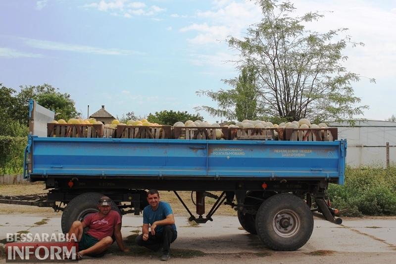 ORGANIK-product: в Бессарабии на полях уникального органического фермерского хозяйства поспели экологически чистые арбузы и дыни
