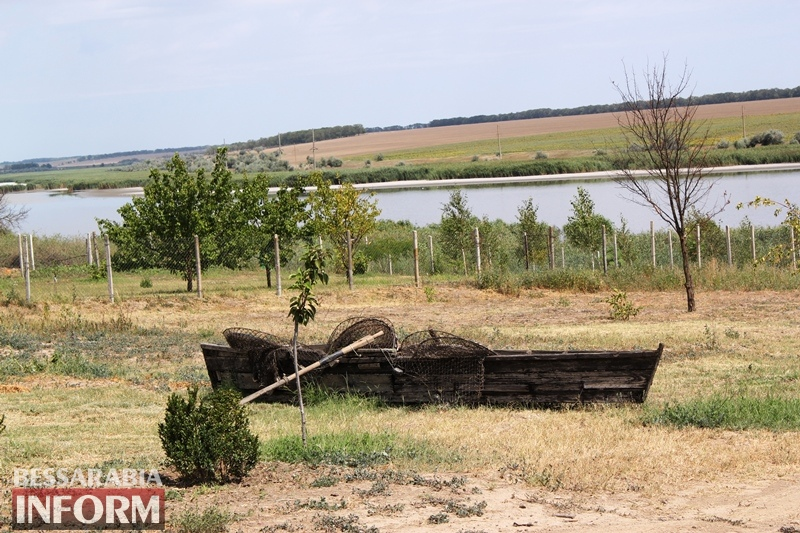 Тихое рогатое стадо: как в Бессарабии выращивают деликатесных французских улиток - репортаж с экофермы