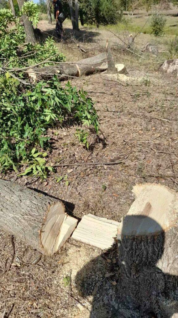Дубовая роща пошла под спил: в Татарбунарах задержан циничный дровосек
