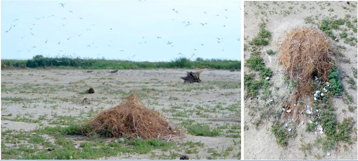 Природа не признает границ или история одного филина, которого переселили в украинскую часть дельты Дуная