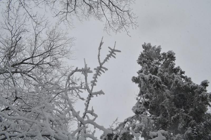 Аккерман в белоснежных красках (фоторепортаж)
