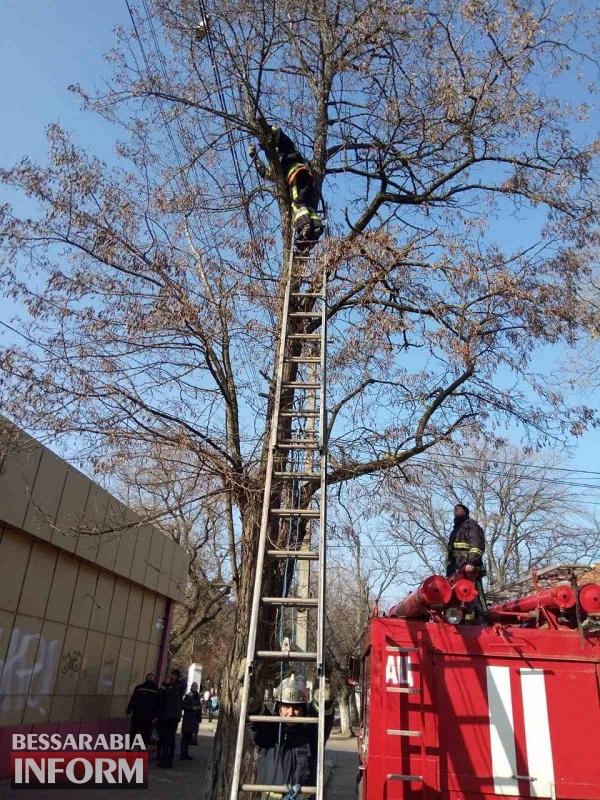 Сидел на ветке между проводами: в Аккермане спасатели сняли кота с пятиметровой высоты