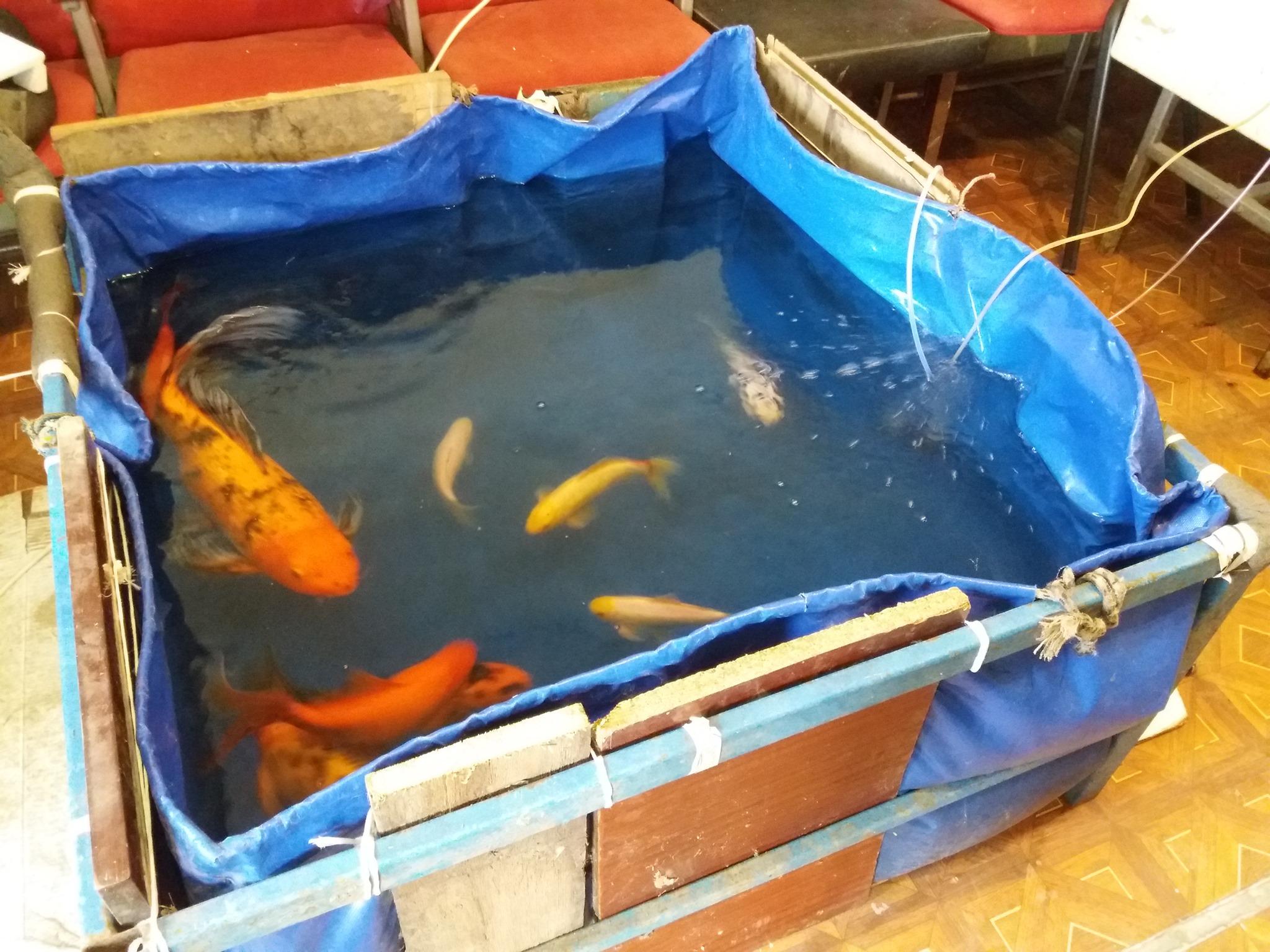 В Измаиле на Станции юннатов строят пруд для декоративных рыб