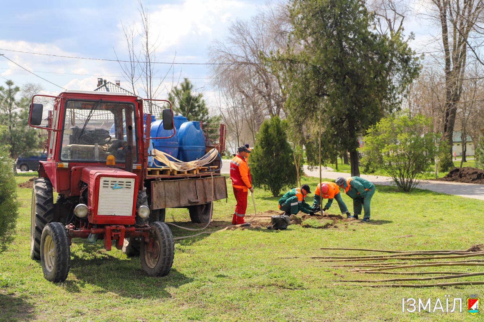 В Измаиле проходит весенняя высадка деревьев (фото)