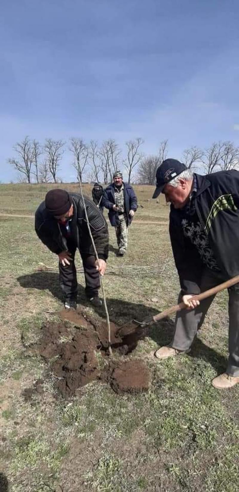 В Кубейской громаде высадили более тысячи деревьев