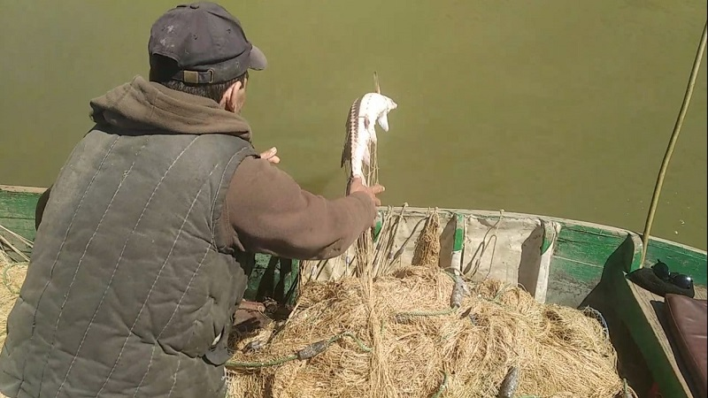 Измаильские пограничники поймали двух браконьеров на вылове краснокнижной севрюги на Дунае
