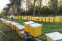 В Ренийской громаде создана постоянная комиссия по установлению факта отравления пчёл