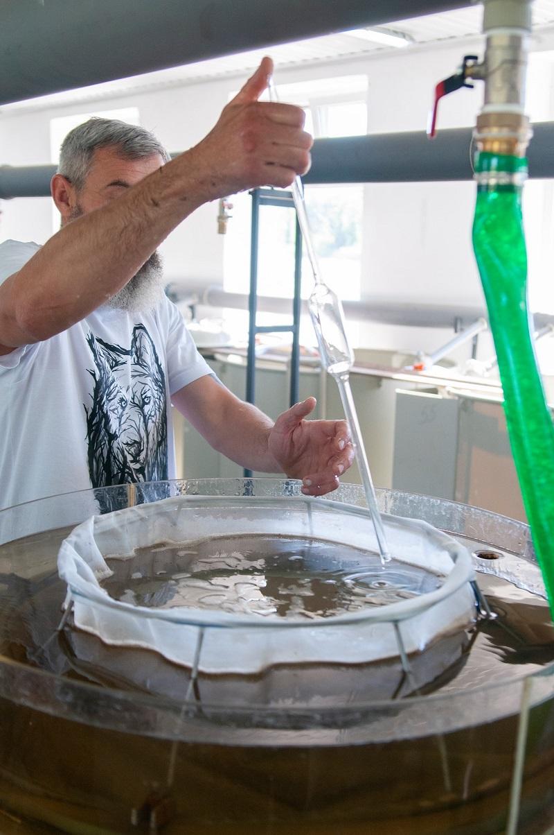 В Старой Некрасовке открыли новый инкубационный цех, в котором уже разводят малька карпа и толстолоба и планируют выращивать осетровых