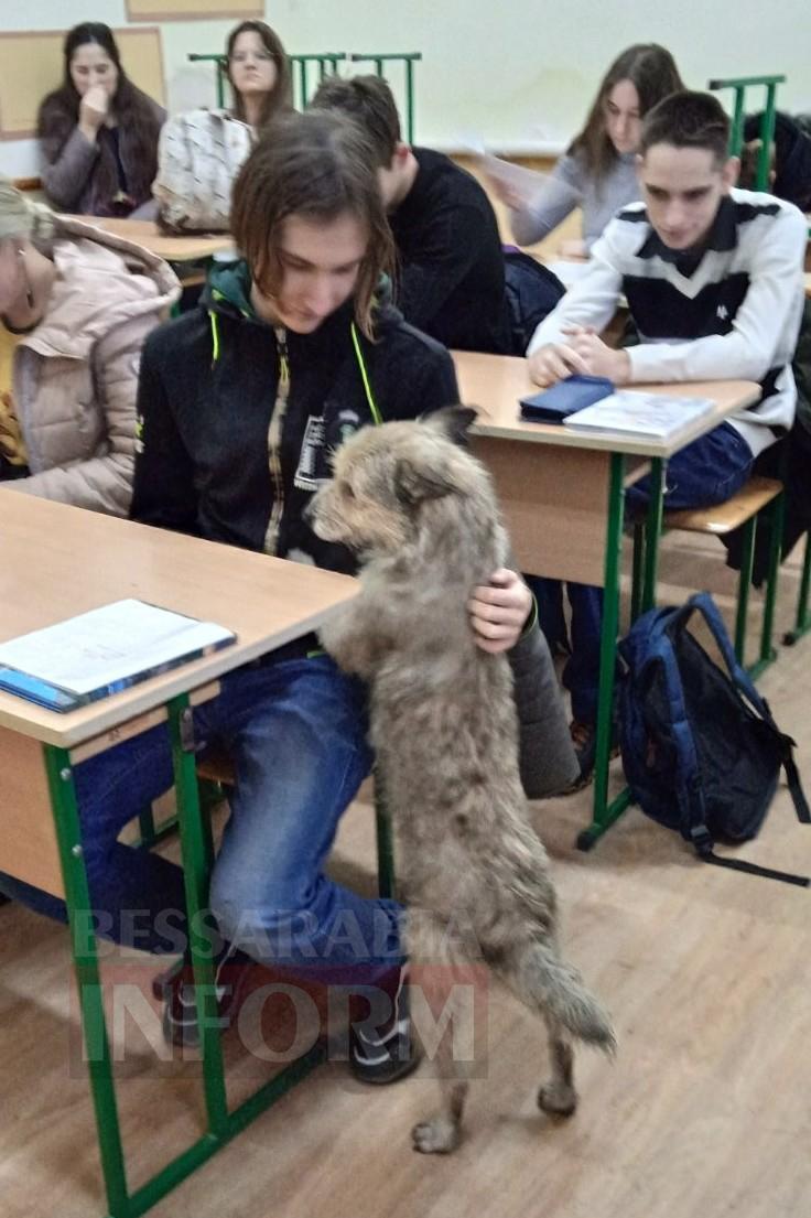 Килийский Хатико: на школьный выпускной пригласили собаку, которая каждый день провожала своего хозяина на занятия