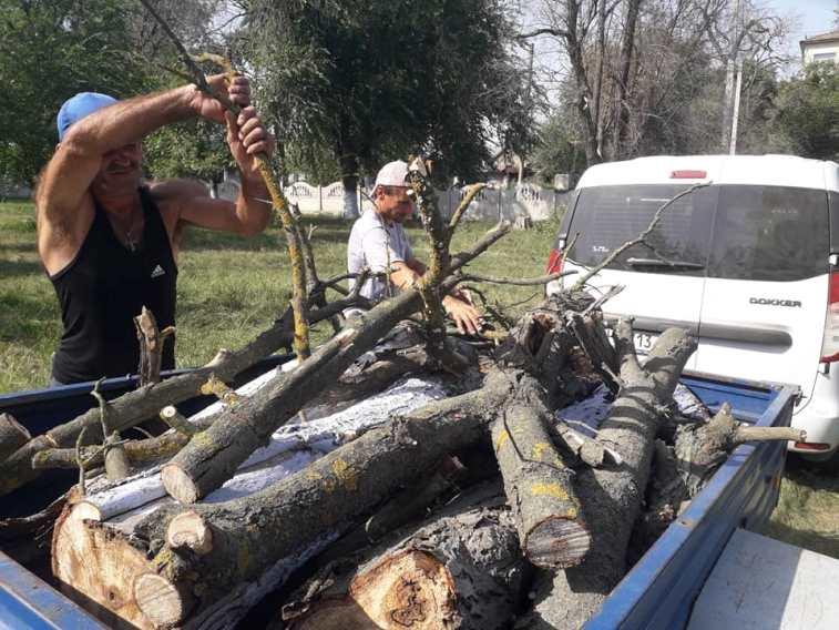 Нуждающимся жителям сел Арцизской громады бесплатно раздадут дрова из спиленного сухостоя
