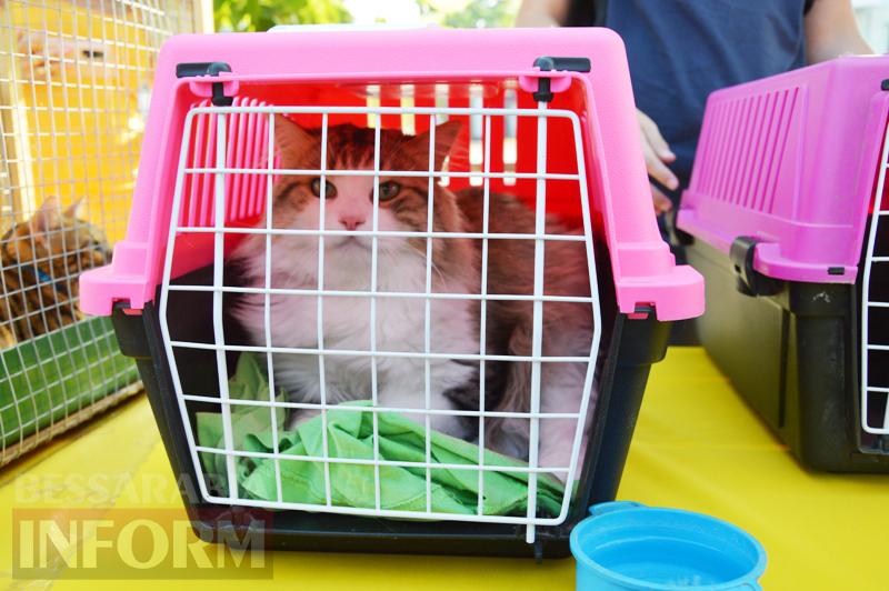 В Килии впервые прошла выставка котов (фото)
