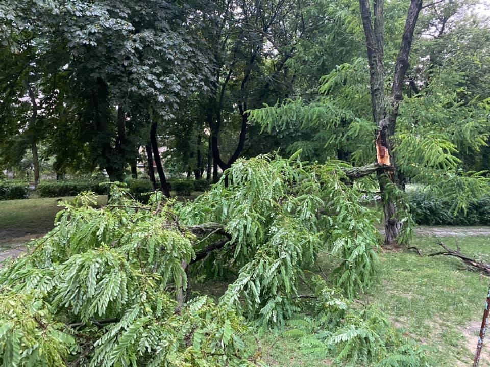 Град размером с яблоко и поваленные деревья: последствия непогоды, обрушившейся на Одесскую область
