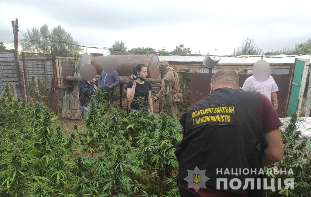 Четверо жителей Болградского района попались на изготовлении каннабиса