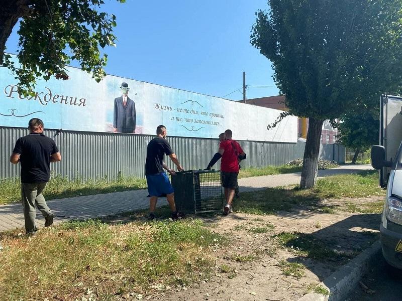 В Аккерман для отлова и стерилизации бездомных животных приехали одесские коммунальщики