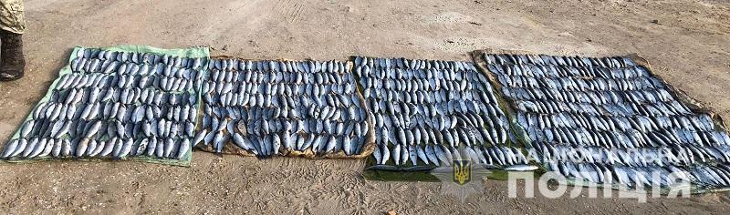 На озере Алибей задержали браконьеров с уловом кефали почти на 2 миллиона гривен
