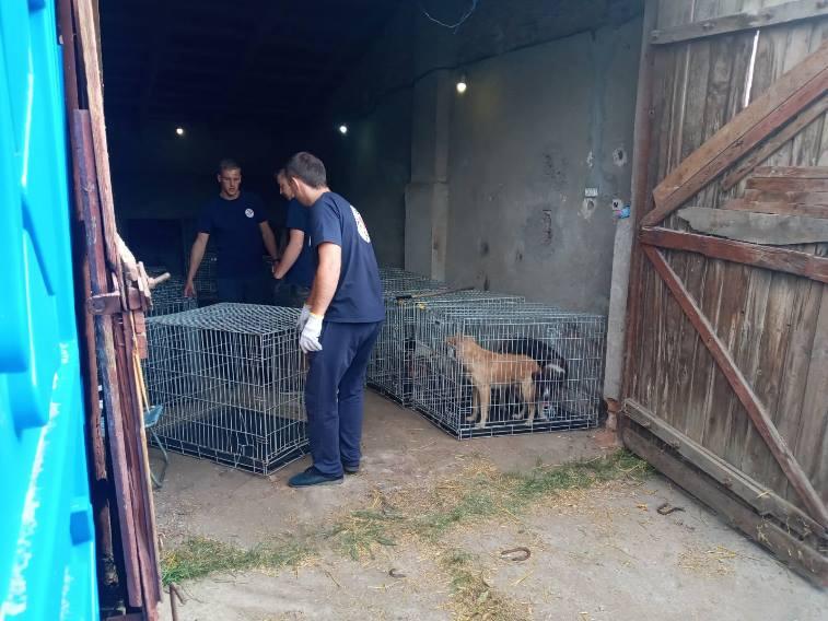 """В Арцизе волонтеры фонда """"Четыре лапы"""" начали стерилизацию бродячих собак"""