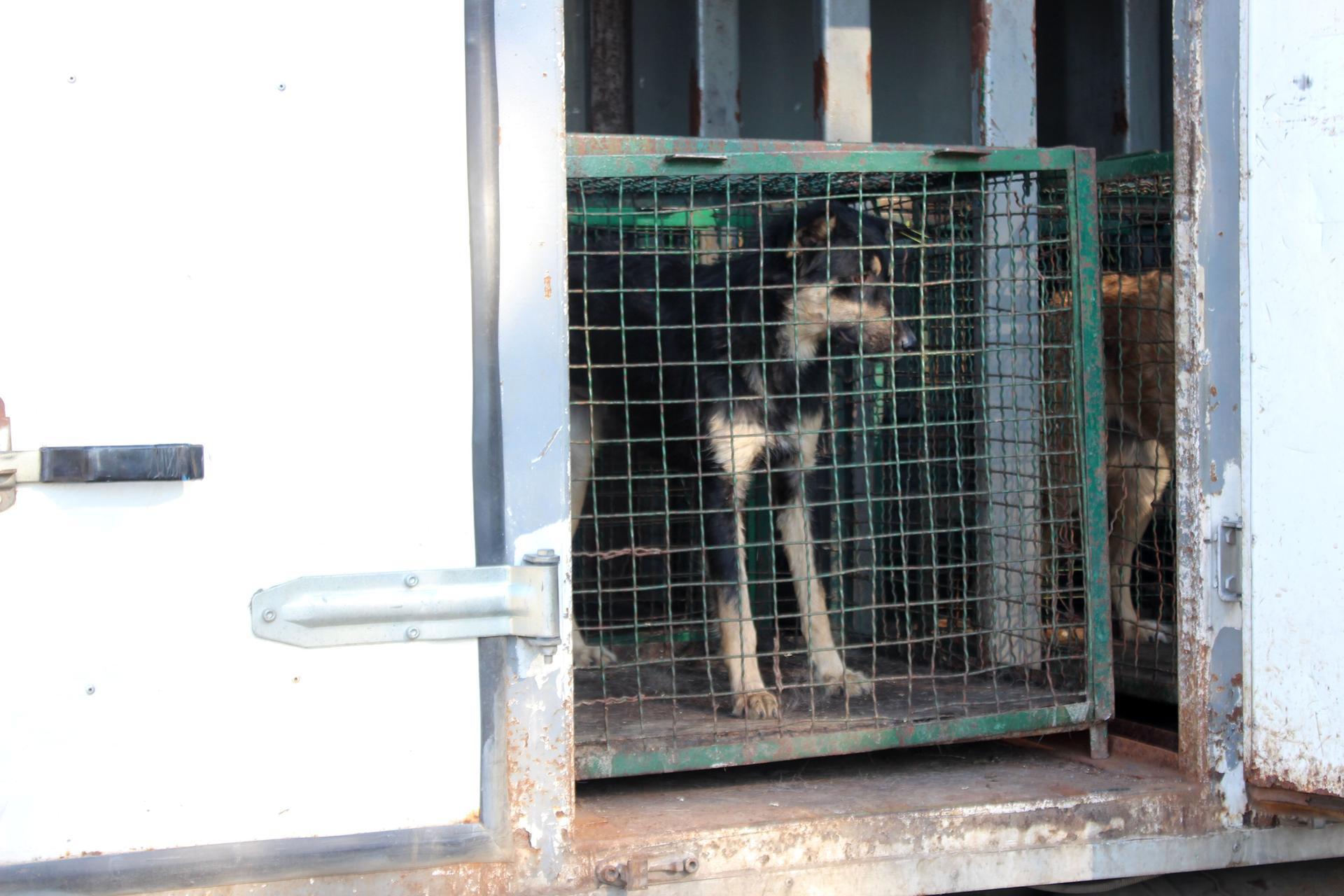 В Белгород-Днестровский вернули ранее отловленных бродячих собак